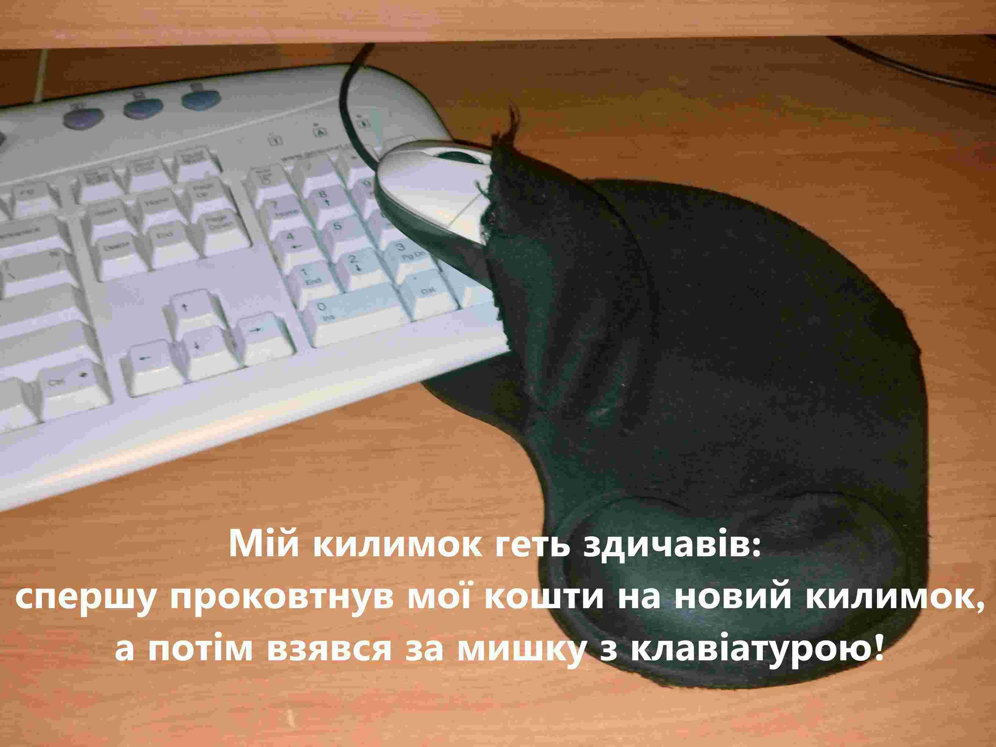 11 Кирилл Данилов kirilldanilov16@gmail.com