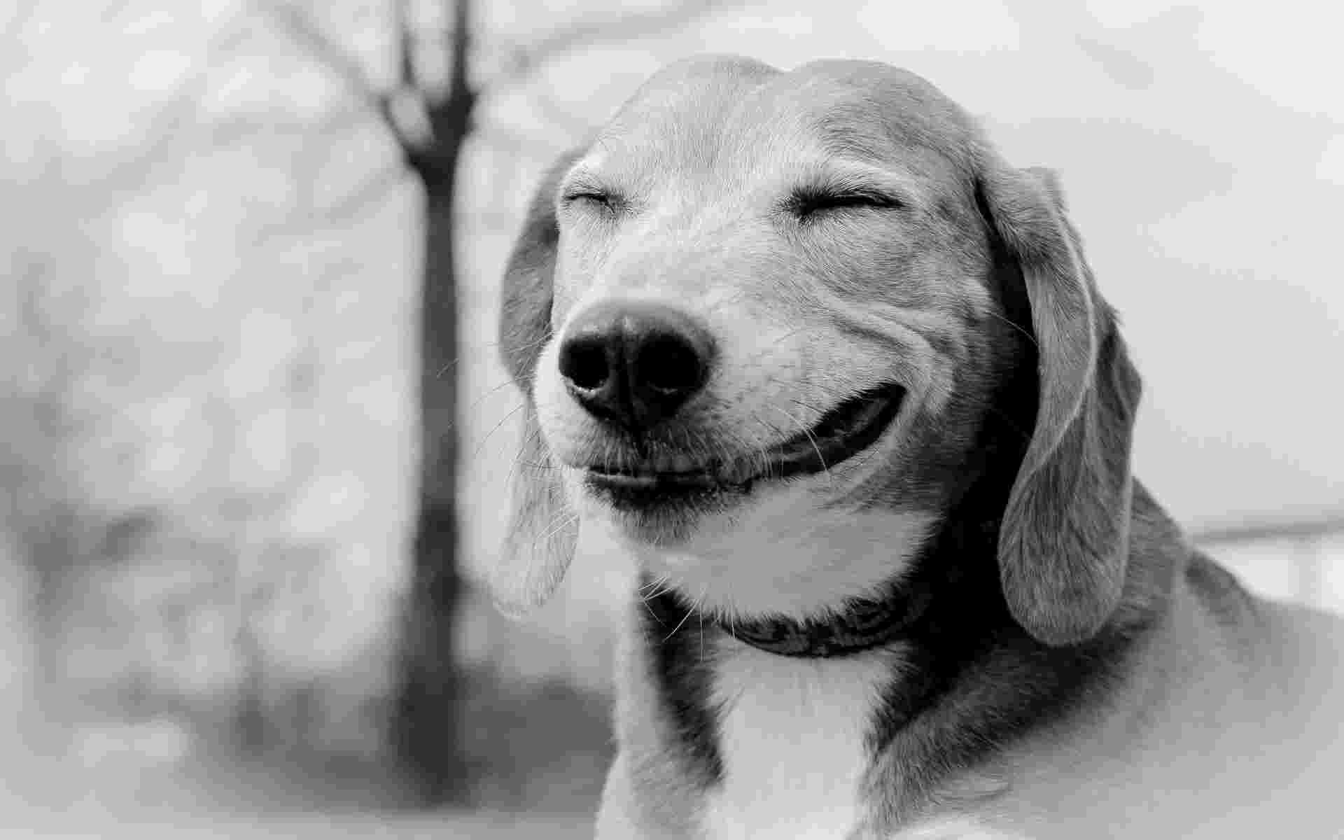 28554-smiling-dog-animal-desktop-wallpaper-1920x1200
